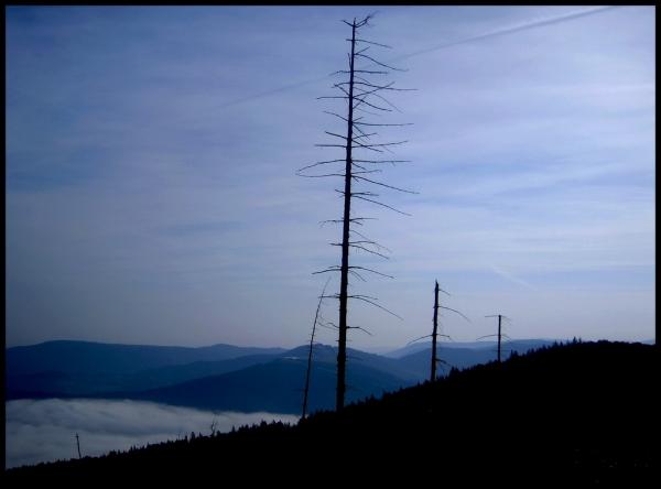 Jak jeden cień w dolinie mgieł... źródło: Galeria Beskidu Malego